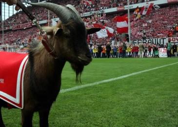 Прогноз: Майнц-Кельн (16.05.15), Футбол